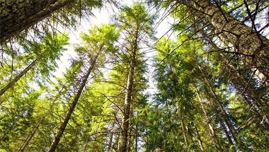 Canadian institutional investment managers close on agreement to affiliate timberwest forest corporation and island timberlands limited partnership